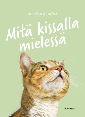 Mitä kissalla mielessä